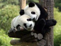 Enjoy This Hug
