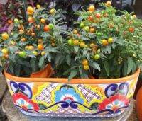 Peppers in a Talavera Container