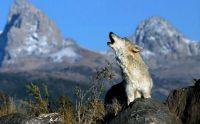 wolf-wolves-32863734-1920-1200
