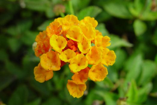 Small orange flower