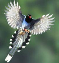 Identify this bird
