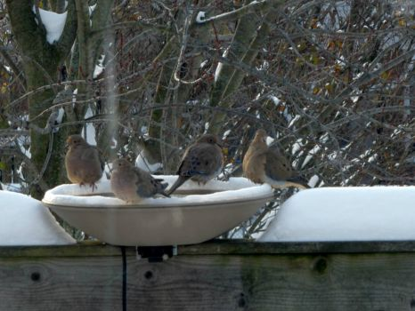 Four Doves