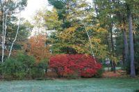 Fall in the backyard