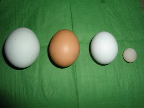 How many eggs does it take to make an omelette?