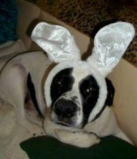 Spike You Silly Bunny!