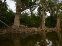 Trees along Onion Creek