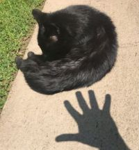 """Neighbors' dog, """"Cattcha,"""" with a shadow of my hand ready to give her some scratching"""