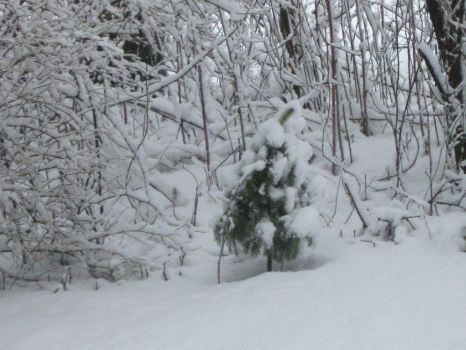 small evergreen and other snow covered branches