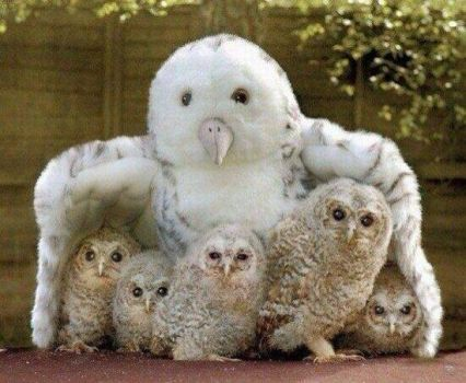 Real baby owls hiding under a stuffed animal owl mama.