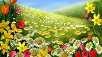 Field n Flowers