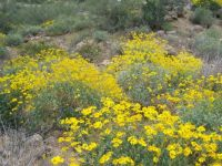 Arizona in bloom