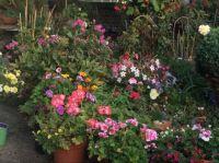 My garden September 2020
