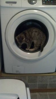 Mimi doing laundry