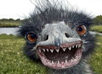 Beware Of Emus That Look Like This