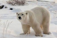 Polar Bear  -  Wass Up?