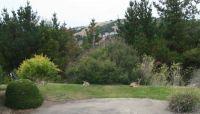 Deer in a back yard in San Leandro