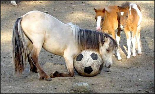 Write a Caption! - horses