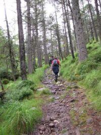 Scottish Highlands--through the Caledonian Pines