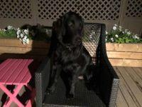 Otis relaxing on the deck