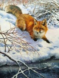 Red Fox by Icey Creek by Bonnie Marris