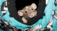 Bean in his hammock