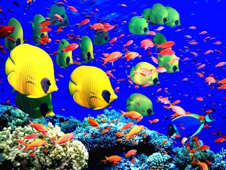 GREAT BARRIER REEF - AUSTRALIA - EXOTIC FISH