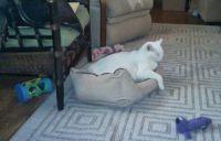 Harry, sleeping in Hoover's doggie bed