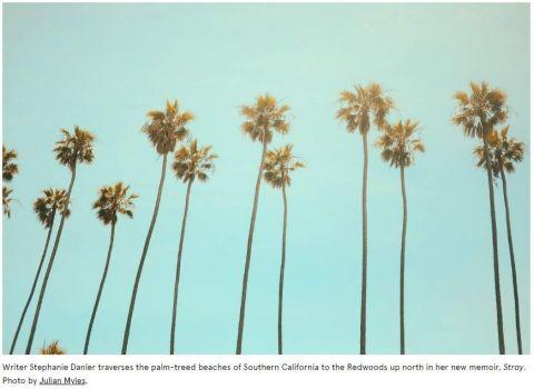 Skinny palm trees