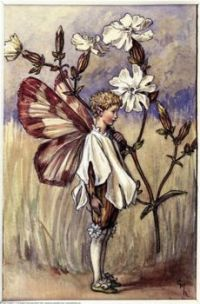 The White Campion Fairy (mini)