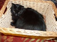 Big Max's answer to cute kittens in baskets...