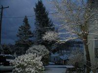 Winter Night Vista