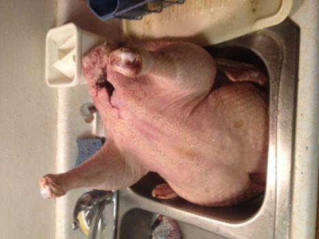 Thanksgiving turkey #2