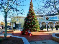 Christmas tree at Mashpee commons