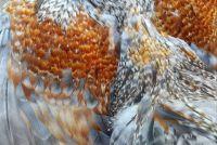 Richard's Feathers
