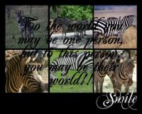 zebra collage with quote by budgieluv