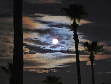 Full Moon In Phoenix