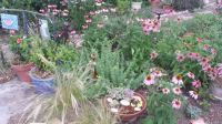 Welcome to Rhonda's farm, Princeton, Texas, with gardens full of tiny pleasures