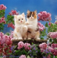 Two kittens and flowers