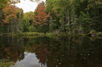 Fall in Michigan - reflections