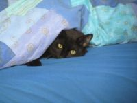 Keeping Warm Under the Duvet 2