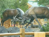 Bronze Elks, West Yellowstone, MT