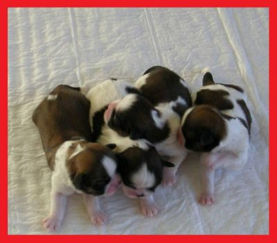 The 4 puppies