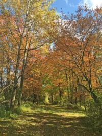 Fall foliage, country lane