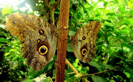Two butterflies, Germany - photog unknown