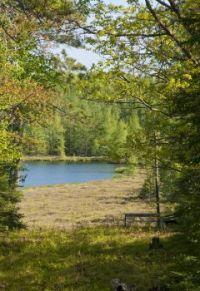 Path to Mud Lake - St. Germain, Wisconsin