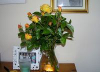 Roses from my garden 1
