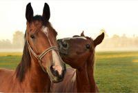 Horses / Konie (2)