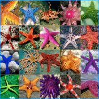 Under The Sea - Starfish!  (L).jpeg
