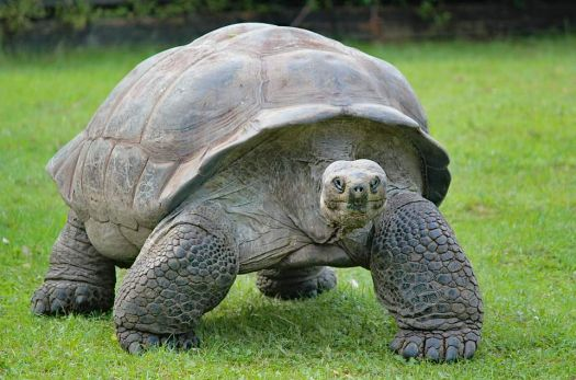 Huge Zoo Turtle