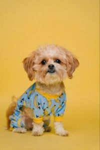 Cute Puppy with Banana Sweater